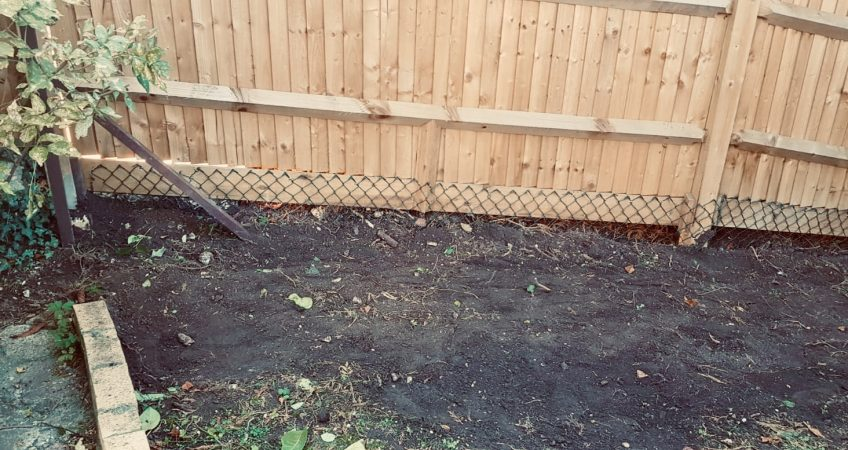 Fox and badger proof fencing
