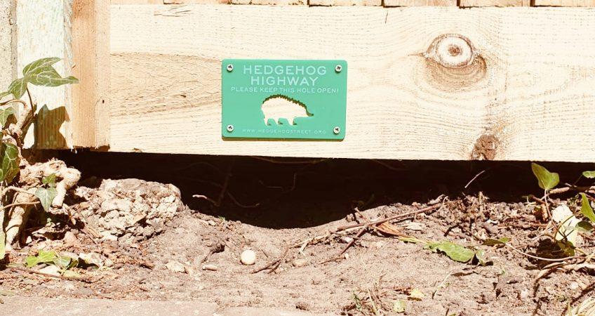 Hedgehog Highway - Hedgehog friendly fence installed by South London Fencing